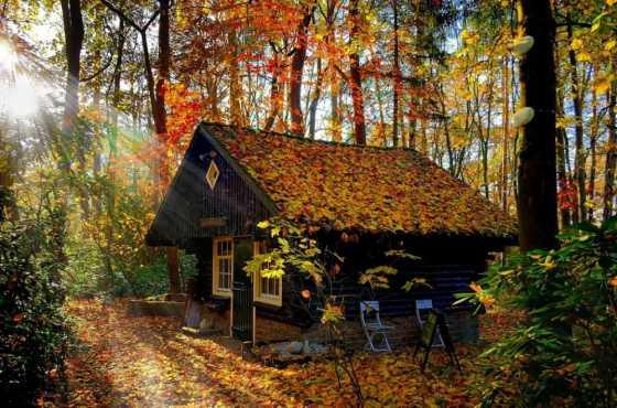 dom priroda 14