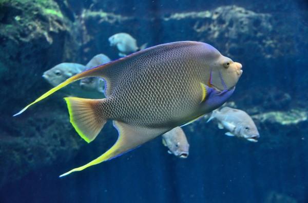 fish pix 1