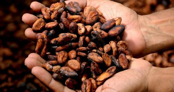 cacao hands pix