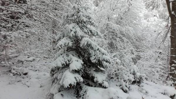 snow 171219